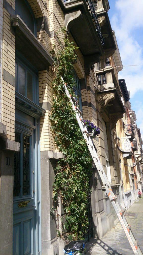 Taille d'entretien à l'échelle sécurisée en façade